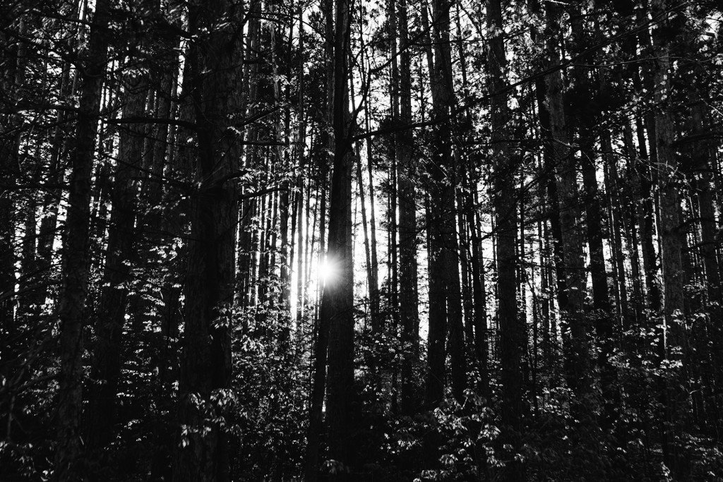 forestflare